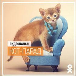В Одноклассники презентовали новые видеоканал и тему оформления, связанные с животными