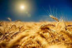 Украинские аграрии вновь поменяли мнение о выгоде  Соглашения с  ЕС