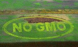 В России запретили использование ГМО