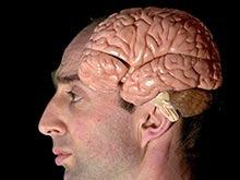 Ученые рассказали о различии мозга мужчины и женщины