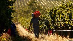 Парламент ЮАР разрешил реквизировать землю у белых фермеров