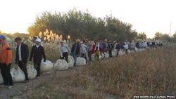 В Узбекистане медицинских работников принудительно погнали собирать хлопок