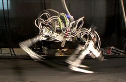 Зачем Google нужно столько роботов?