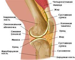 Анатомы открыли ранее неизвестную связку в человеческом колене