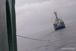 В Арктике пограничники РФ задержали судно Гринписа с гражданами Украины на борту