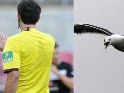 Футбольный арбитр в Бразилии стал мишенью для атаки бешеной птицы