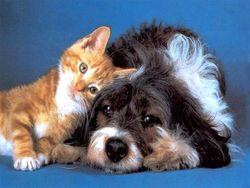 Новый вид мошенничества: На деньги разводят владельцев собак и котов