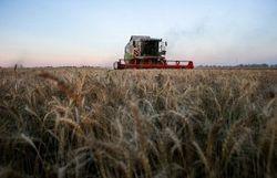 Опять врут: Турция и Саудовская Аравия не покупало зерно у Крыма