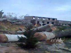 Узбекистан: в Джизаке массово вырубают многолетние чинары