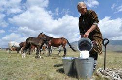Новая жертва Онищенко - молочные производители Литвы