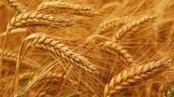 Экспорт украинской сельхозпродукции в ЕС вырос на 14 процентов