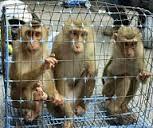 """На таможне в """"Борисполе"""" у Сирийцев изъяли...15 обезьян"""