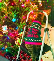 Почему кошки любят портить новогодние елки