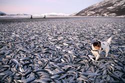 Рыболовам России выгоднее экспортировать рыбу, чем продавать ее дома