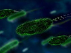Супербактерий нашли на пляжах олимпийского Рио-де-Жанейро