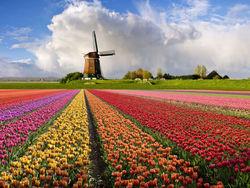 Рынок недвижимости Нидерландов близок к развороту
