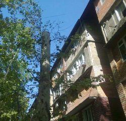 В столице Узбекистана продолжают убивать здоровые деревья