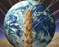 Продукты в мире рекордно подешевели - ООН