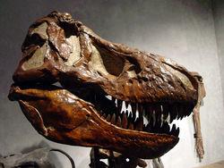 Ученые: динозавры вымерли случайно