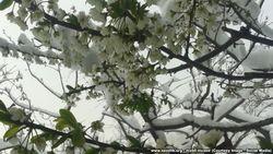 Морозы уничтожили 70 процентов плодовых деревьев в Узбекистане