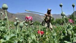 В регионе Центральной Азии наркоторговлей управляют чиновники