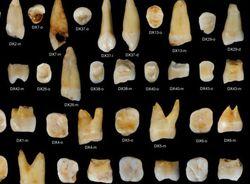 Ученые получили новые данные о расселении древнего Homo sapiens по миру