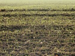 Китай готов вложить в СП под сельхозугодья в Украине 2,6 млрд. долларов