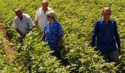 Правительство Узбекистана будет продавать авто преуспевающим фермерам вне очереди
