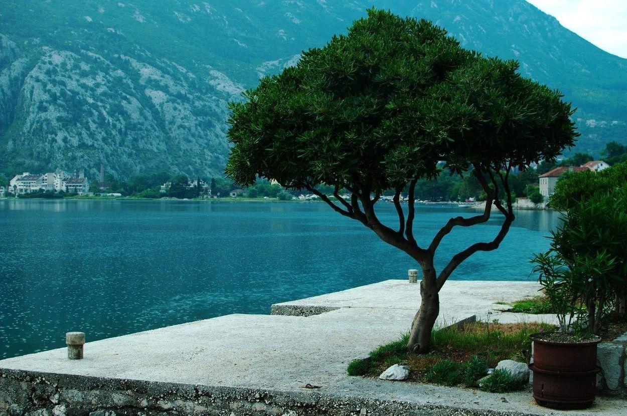 Недвижимостью в черногории