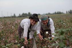 Всемирный банк должен прекратить финансирование проектов в Узбекистане!