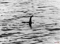 У берегов Крыма появился морской змей наподобие чудовища из Лох-Несса