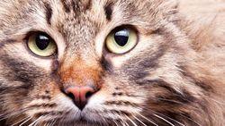 Почему кошки не живут стаями