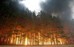 Власти заверяют, что пожары не угрожают космодрому Восточный