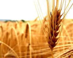 Цены на зерно в России