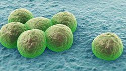 С супербактериями будут бороться все страны под эгидой ООН