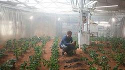Земные микроорганизмы выживут на Марсе – доказано экспериментом