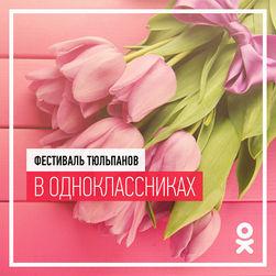 В Одноклассники стартовал фестиваль тюльпанов