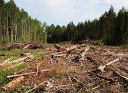Экологи призывают запретить рубку леса в заповедниках