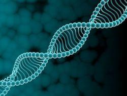 Ученые нашли ген, отвечающий за инфаркт – выводы