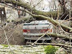 Над Западной Грузией ураган: сорваны крыши, повалены деревья и столбы