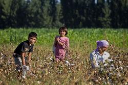 Власти Узбекистана: детей эксплуатирует фермеры и... родители