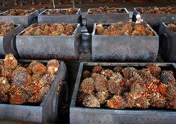 Кошмар для Онищенко: Россия резко увеличила импорт пальмового масла