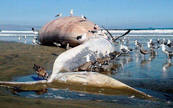 Фото самые огромные киты в мире