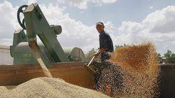 Экспортная пошлина препятствует развитию зерновой отрасли в России