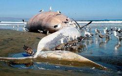 Суицидальный «Синий кит» взял курс на Европу