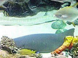 И вторая акула в киевском ТРЦ Ocean Plaza умирает