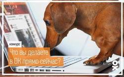 В «Одноклассниках» объявлен конкурс с призом в 500 ОК