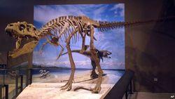 В США откопали кровавого короля - сообщают палеонтологи
