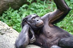 Ученые сравнили гены человека и обезьяны: выводы удивили