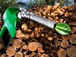 Ученые: кишечная палочка поможет производить бензин будущего